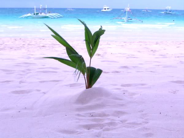 White sand beaches of Boracay