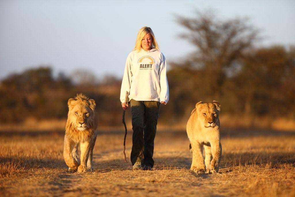 Lion Walk Antelope Park (Rediscover Zimbabwe small group safari)