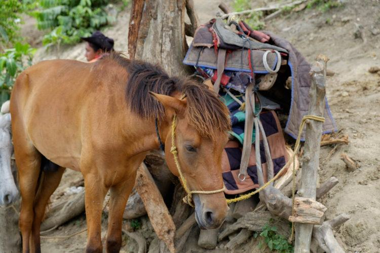 Horse on Mount Taal