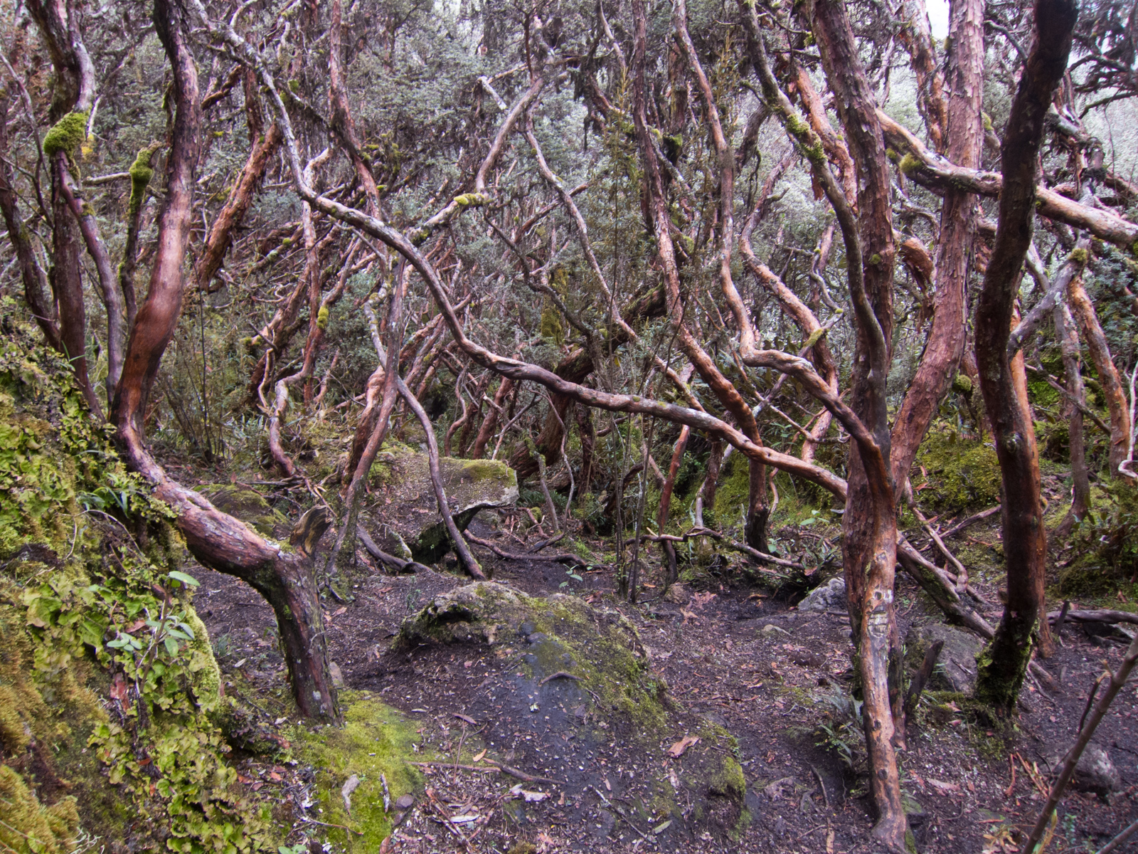 """The quinua """"paper tree"""" forest had a mystical Lord of the Rings feel to it"""