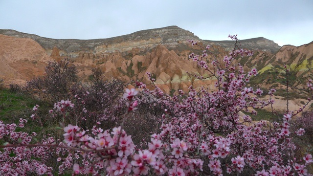Goreme and flowers