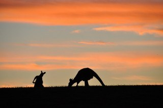 Before a Working Holiday in Oz: Top Concerns with Advice