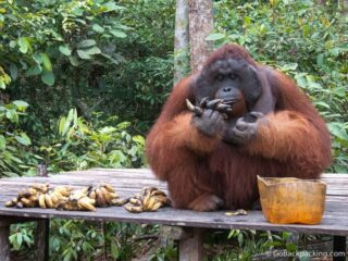Camp Leakey, and the Effort to Save Borneo's Endangered Orangutans