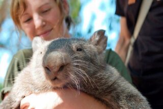 Top Places to See Australian Native Animals in Natural Habitats