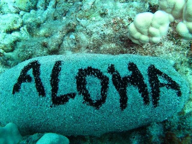 """""""Aloha"""" rock"""