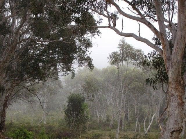 Misty Southern Highlands, NSW (photo: grace_kat)