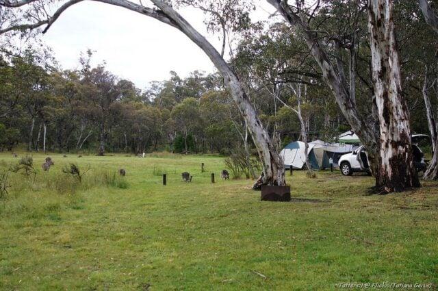 Camping Among Gum-Trees & Kangaroos (photo: Tatiana Gerus)