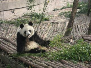Top 5 Things to Do in Chengdu, China