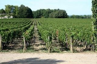 Bordeaux: Chateau Smith Haut Lafitte