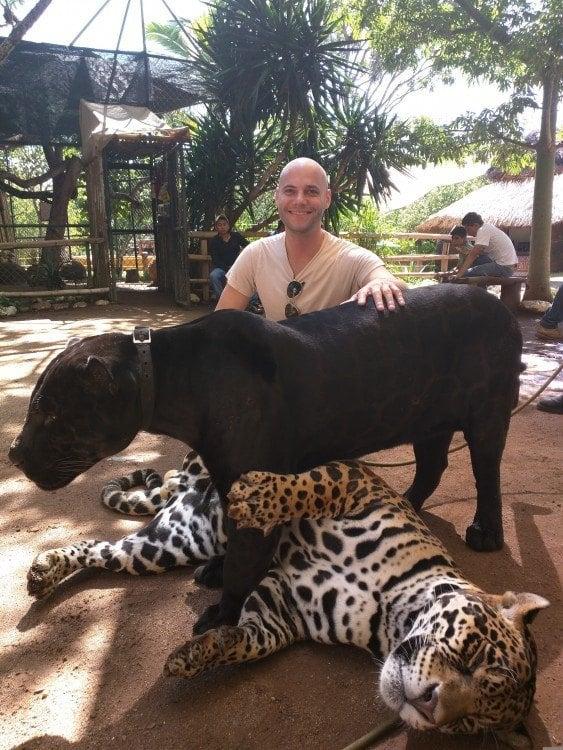 Zoofari Jaguars