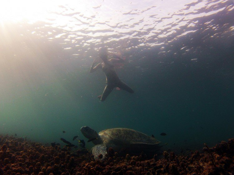 Snorkeling with sea turtles in Koh Tao