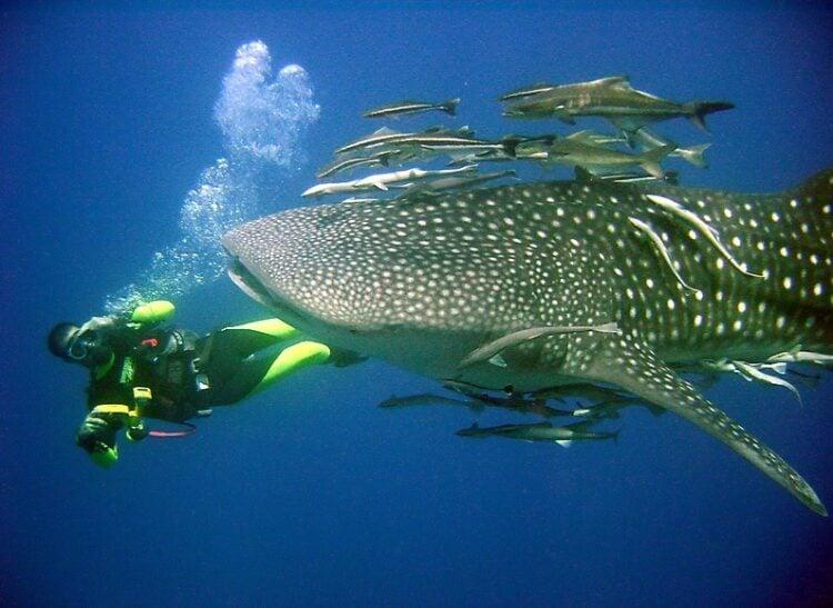 Gulf of Thailand best dive sites