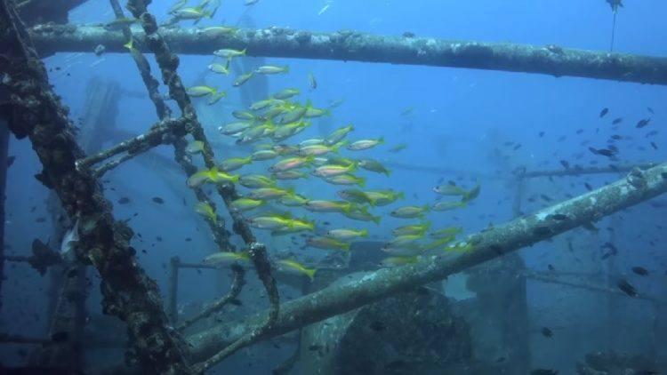 Gulf of Thailand best diving