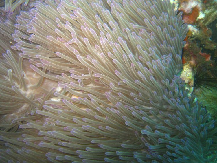 Coral at Sail Rock
