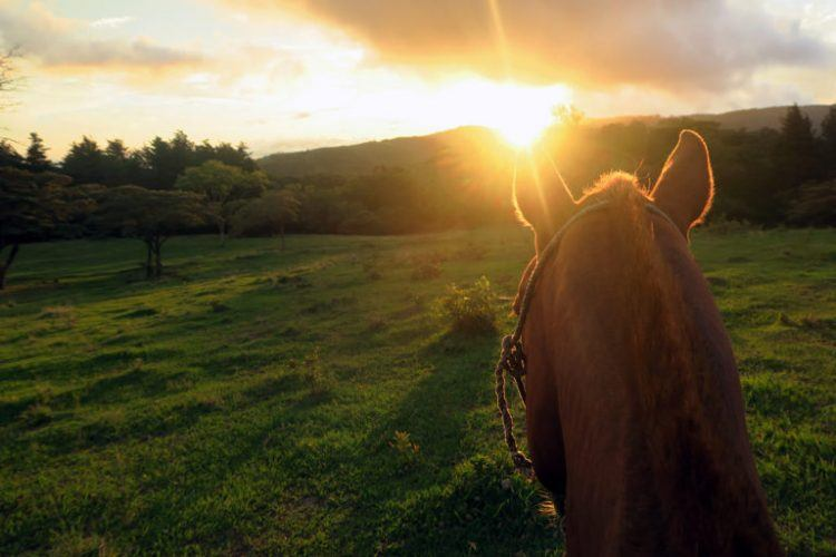 horse-costarica
