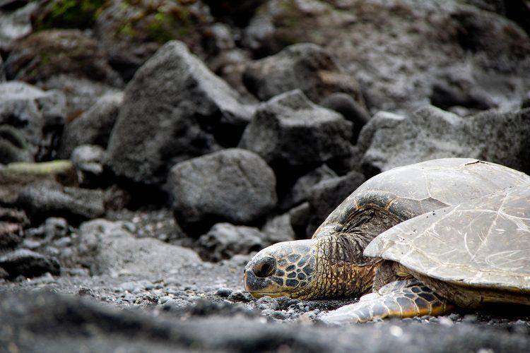 Ffind adventure on the Big Island of Hawaii