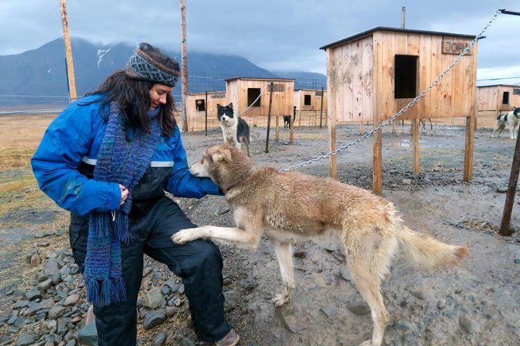 Dog in Svalbard