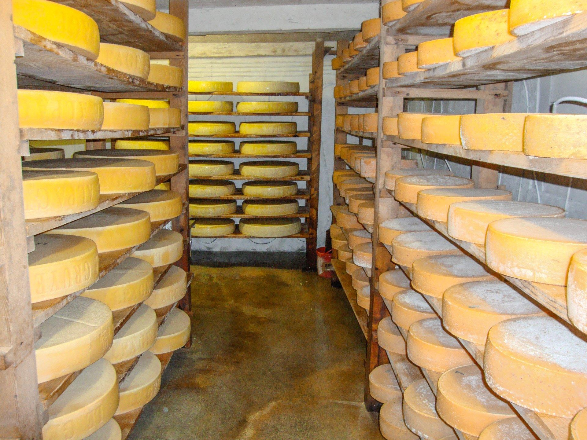 Cheese Making Tours in Switzerland