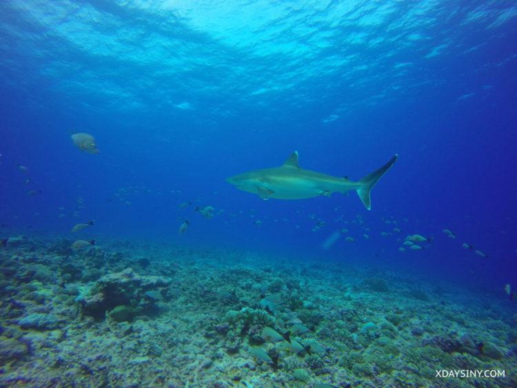 Diving South Pacific - XDAYSINY.COM