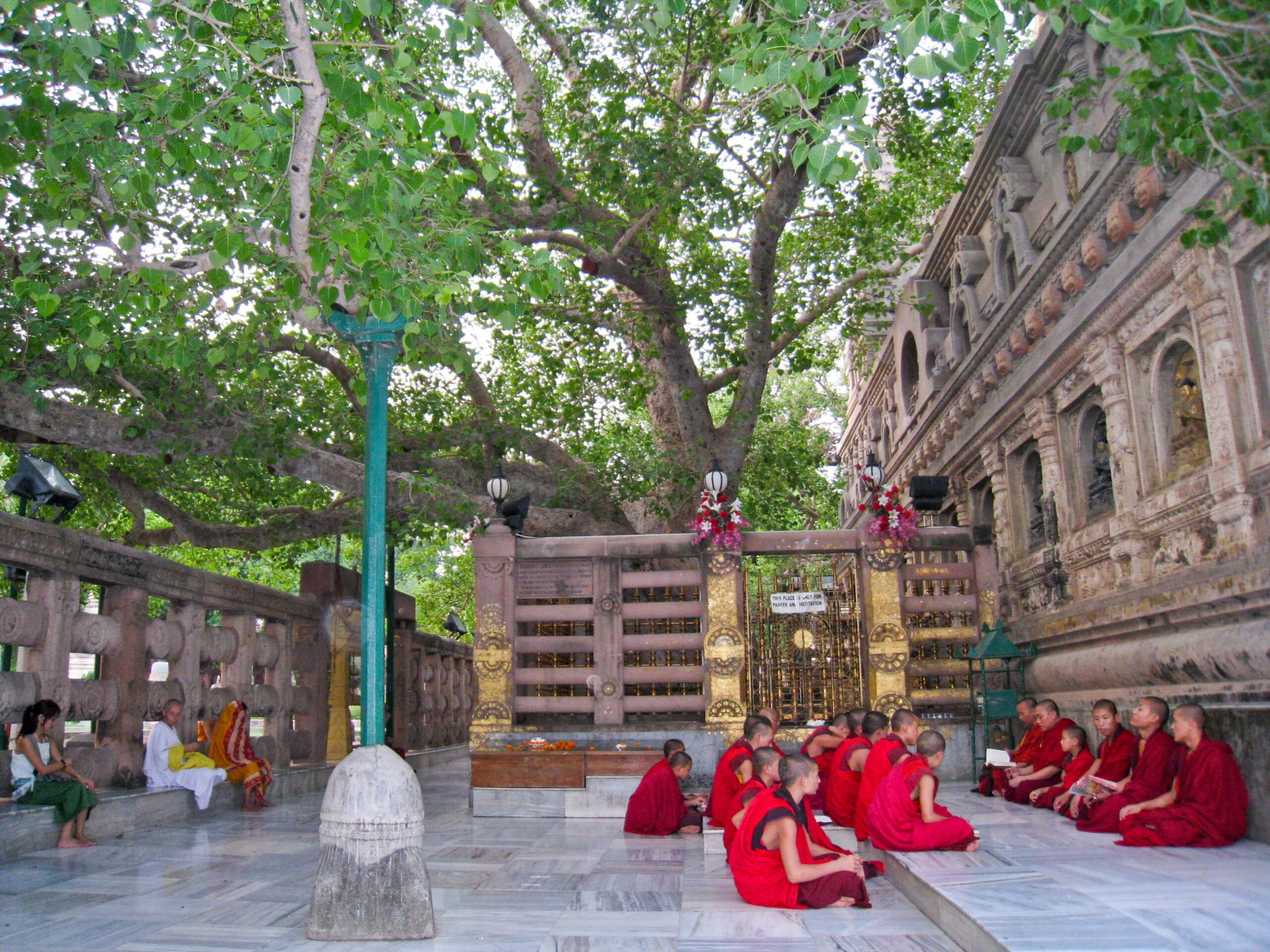 The Bodhi Tree is an important Buddhist spiritual site in India.