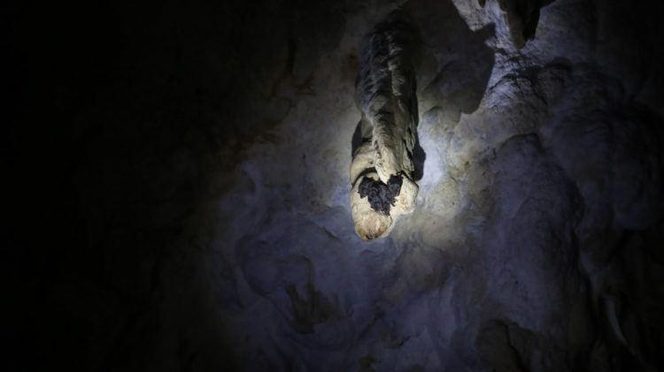 Bats in Kolem Chen Cave