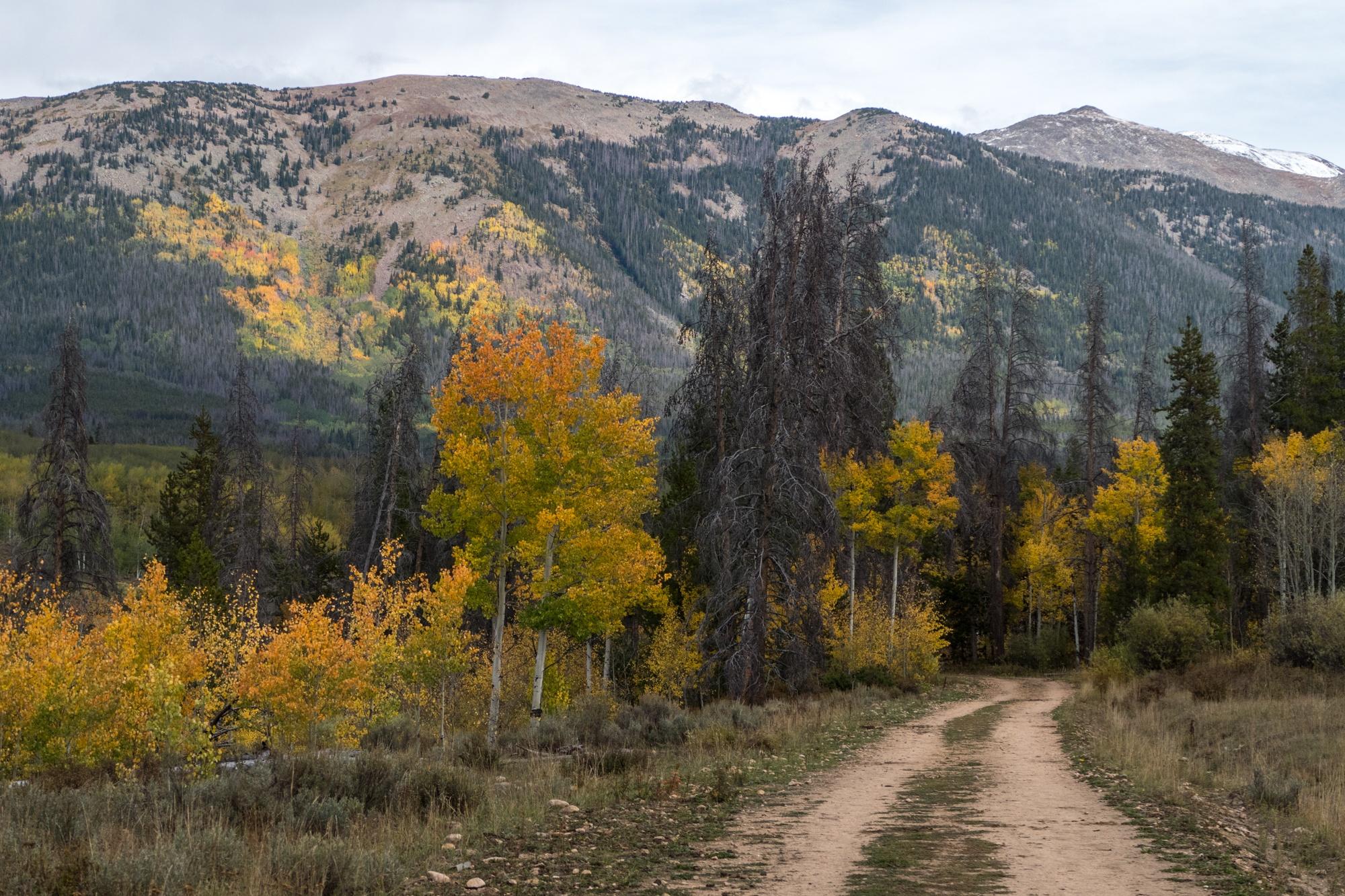 Fall foliage in northern Colorado