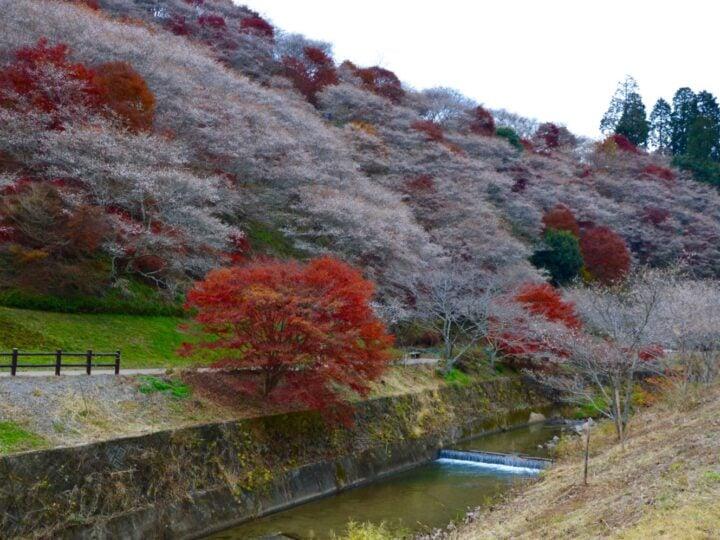 Japan's Chubu Region