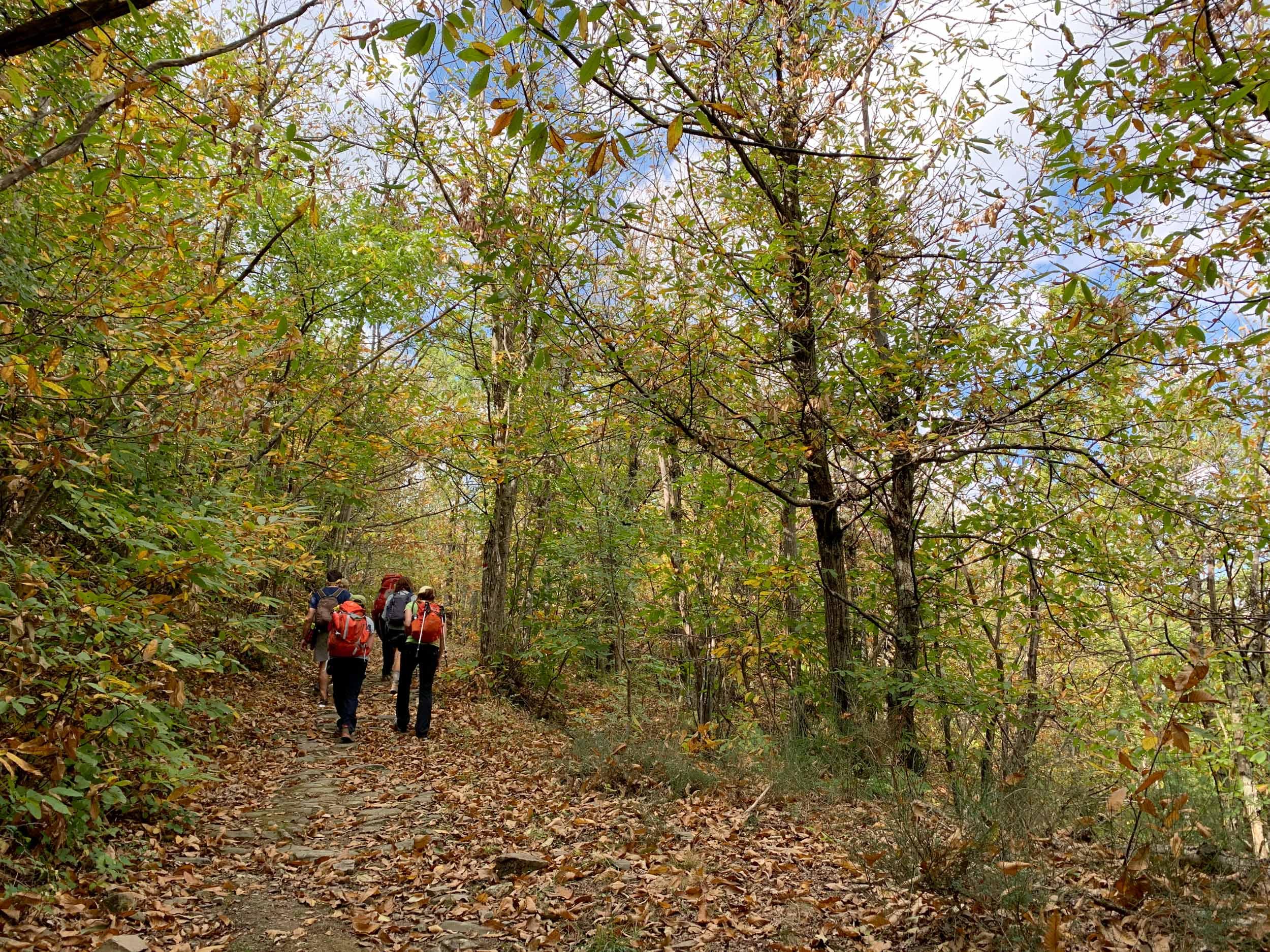 Fall walking tour in Tuscany, along the Via Francigena