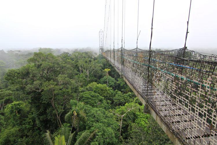Amazon Rain Forrest, Sacha Lodge, Equador