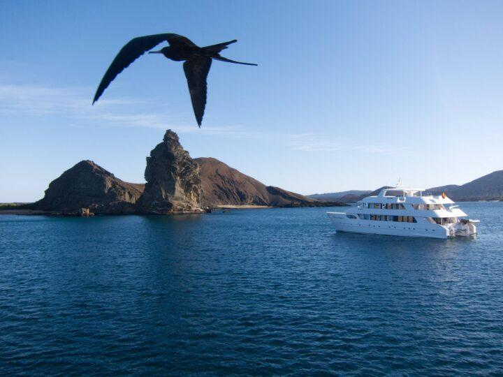 Frigate Bird at sunset in the Galapagos Islands