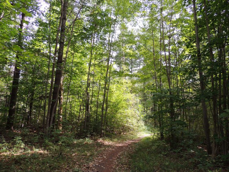Bruce Trail in Ontario, Canada
