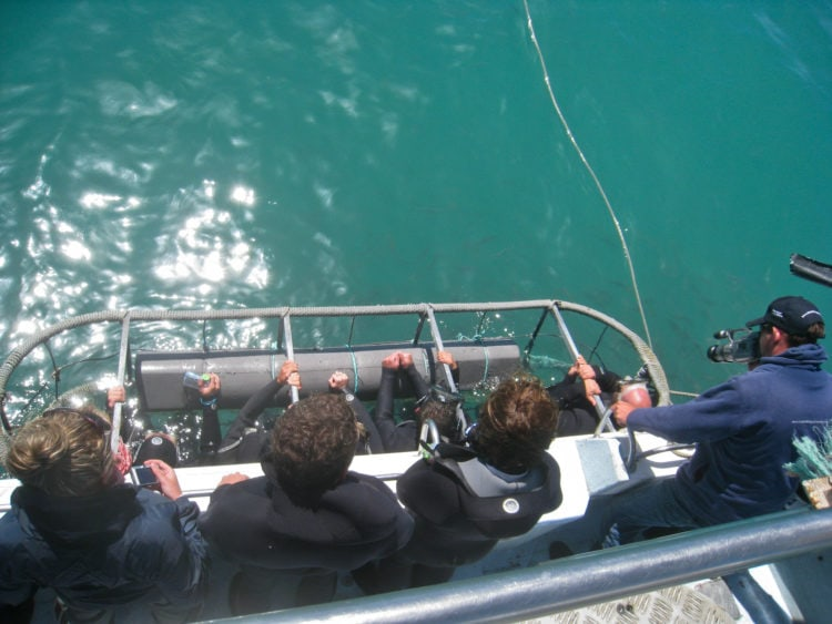 One of the best adventures along the Garden Route in South Africa is shark cage diving