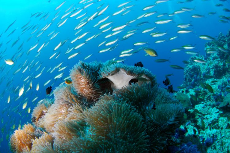 Southeast Asia is one of the best places to dive in the world