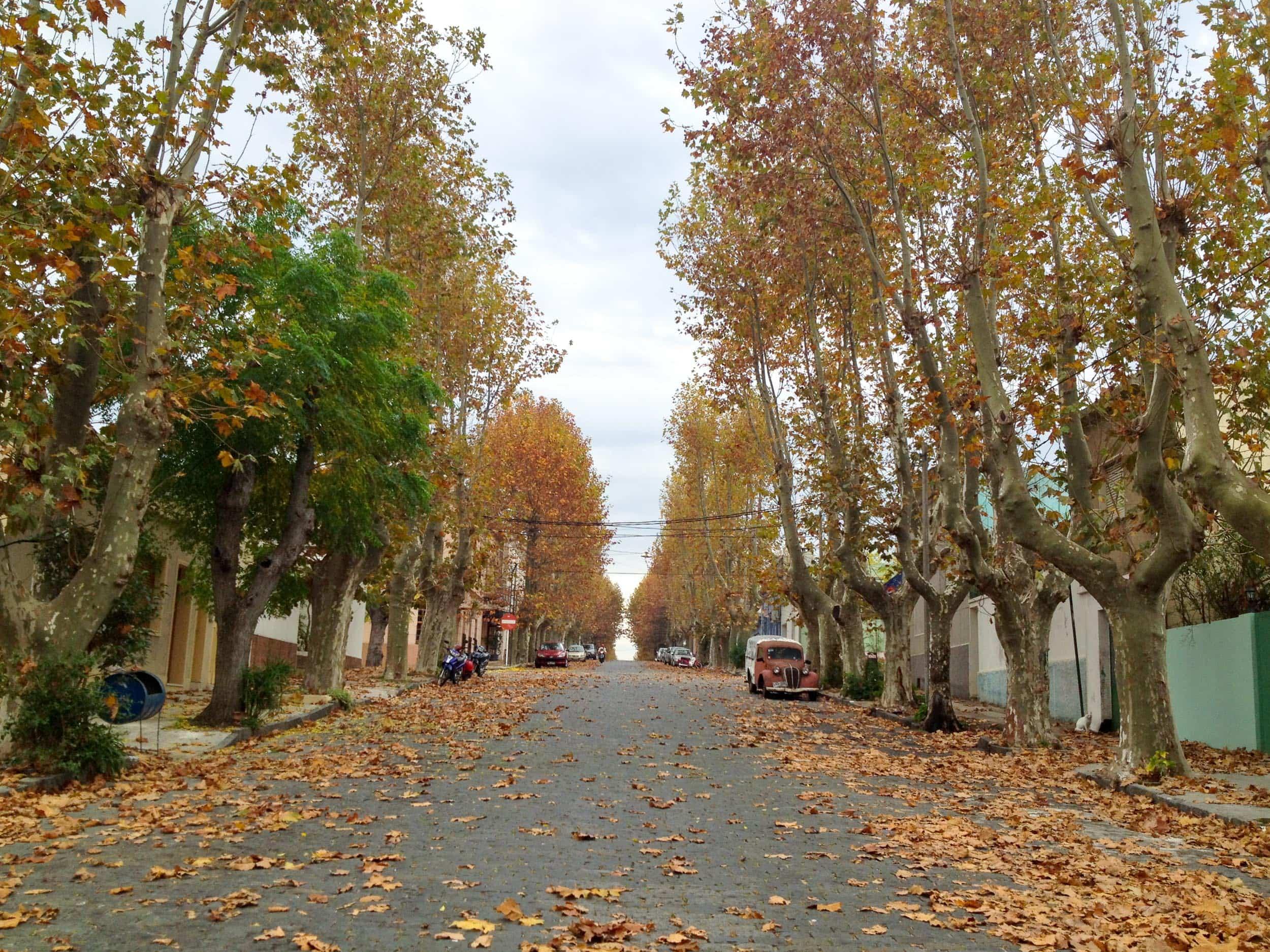 Autumn in Colonia