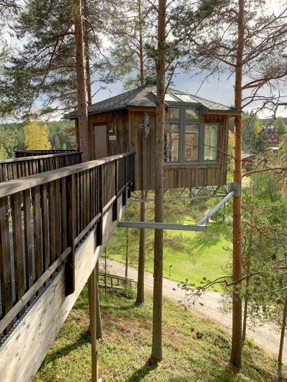 Birds nest at Granö Beckasin
