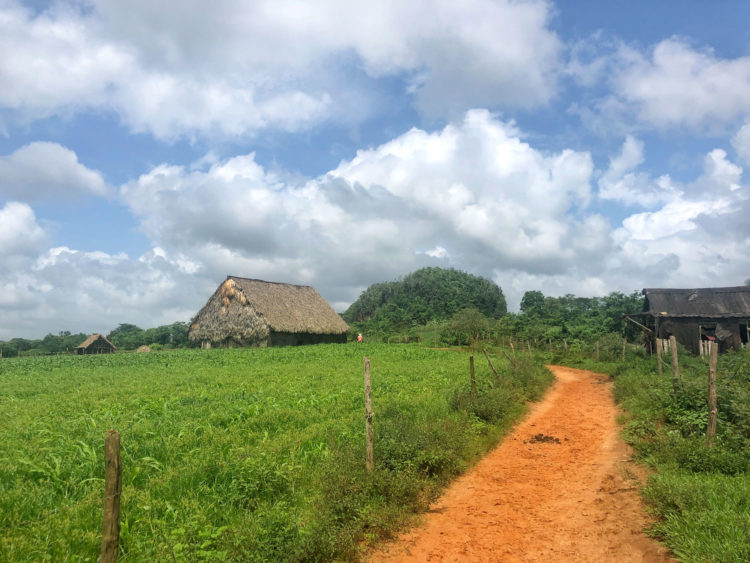 A tobacco farm in Vinales, one of the prettiest places to visit in Cuba