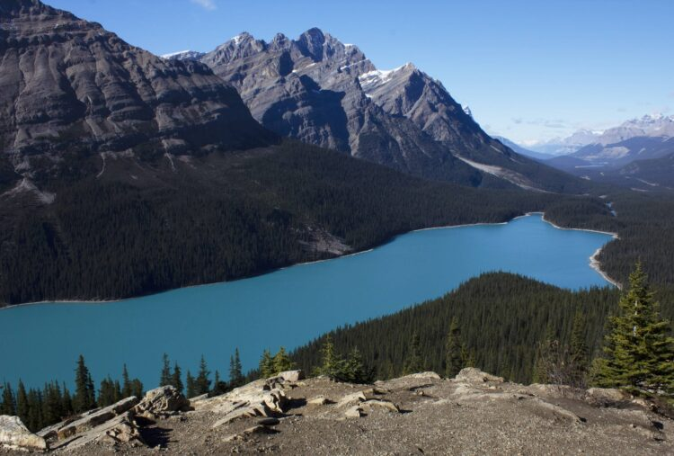 Peyto Lake is visible on road trips in Alberta, Canada