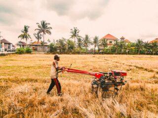 A farm in Bali, Indonesia