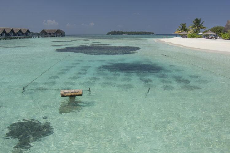 Coral nursery at COMO Cocoa Island