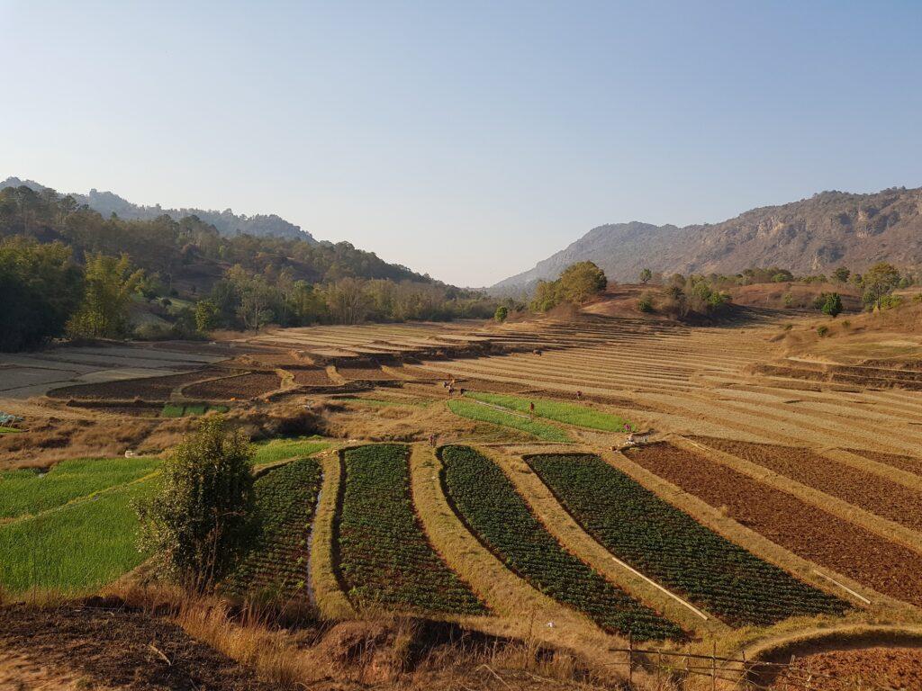 Myanmar fields