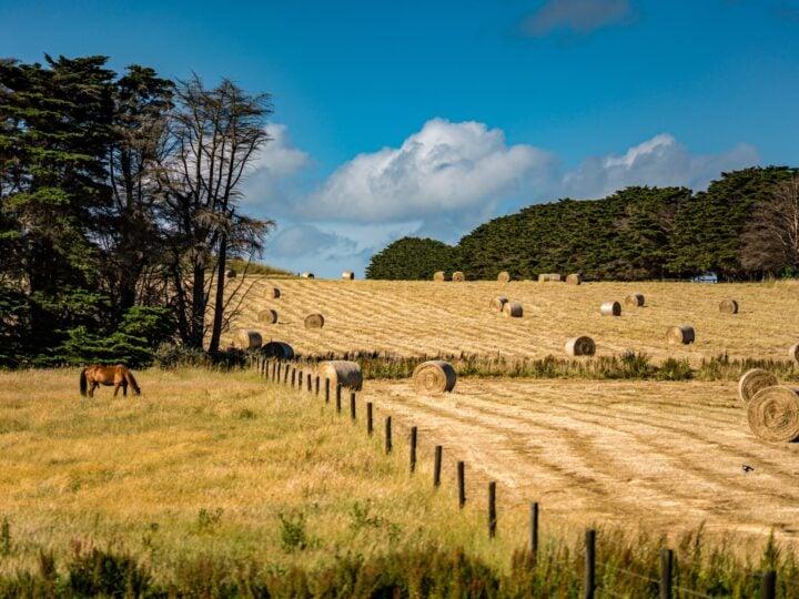 Backpackers often work on farms in Australia (photo: Wai Siew)