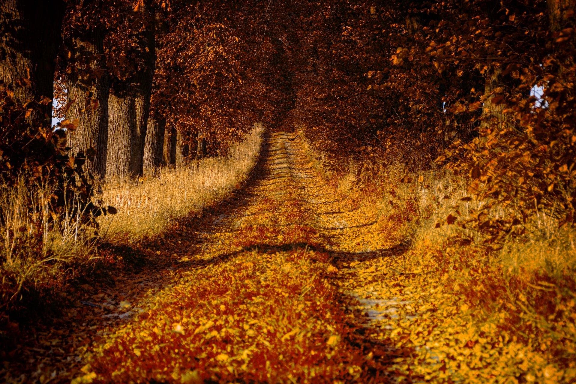 Wielkopolski National Park, Poland (photo: Artur Luczka)