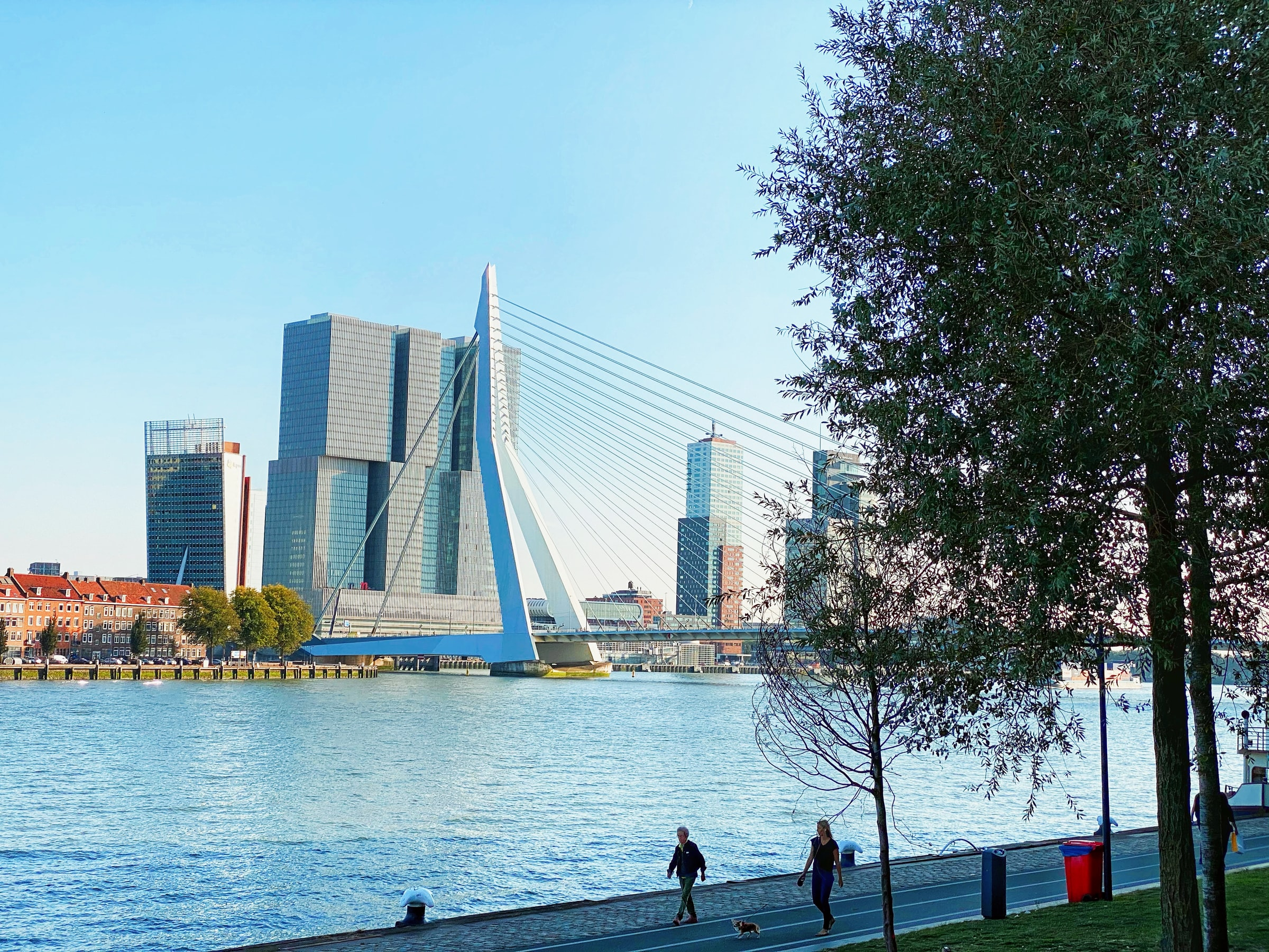 Erasmus Bridge (photo: Flori & Almi Weit.Gereist)