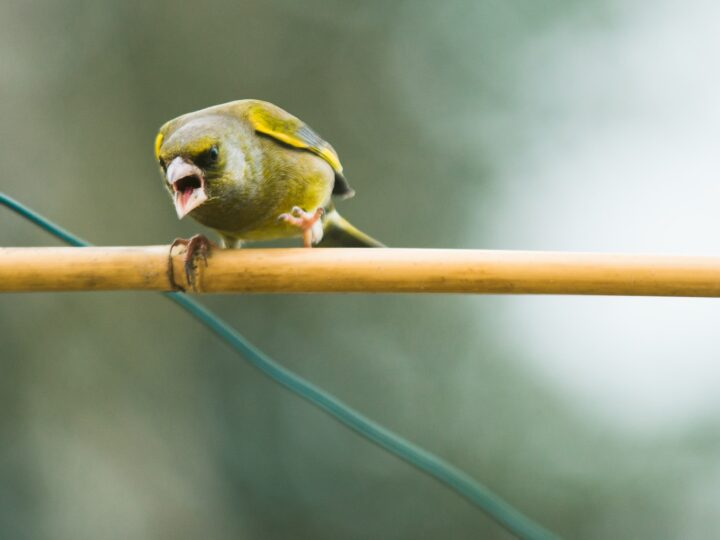 Angry bird (photo: David Knox)