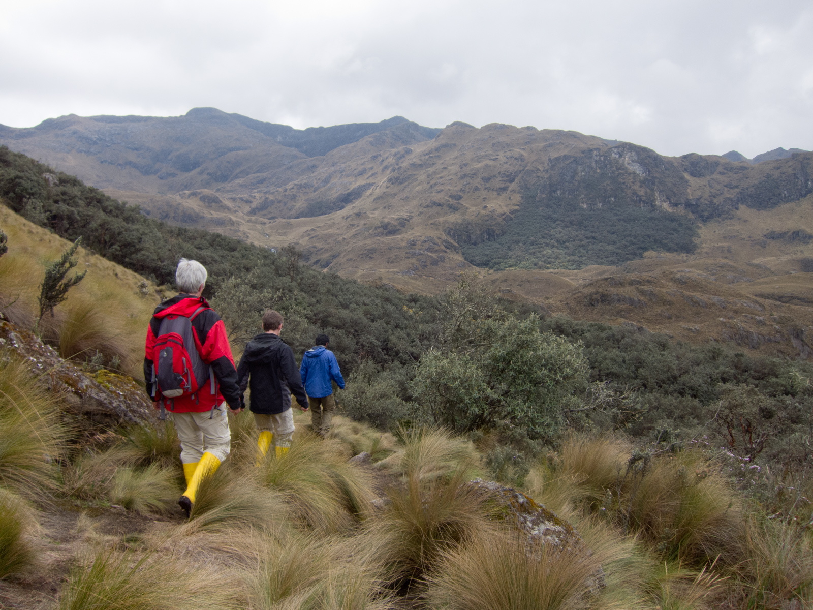 Walking toward a forest, something you rarely see at 4,000 meters