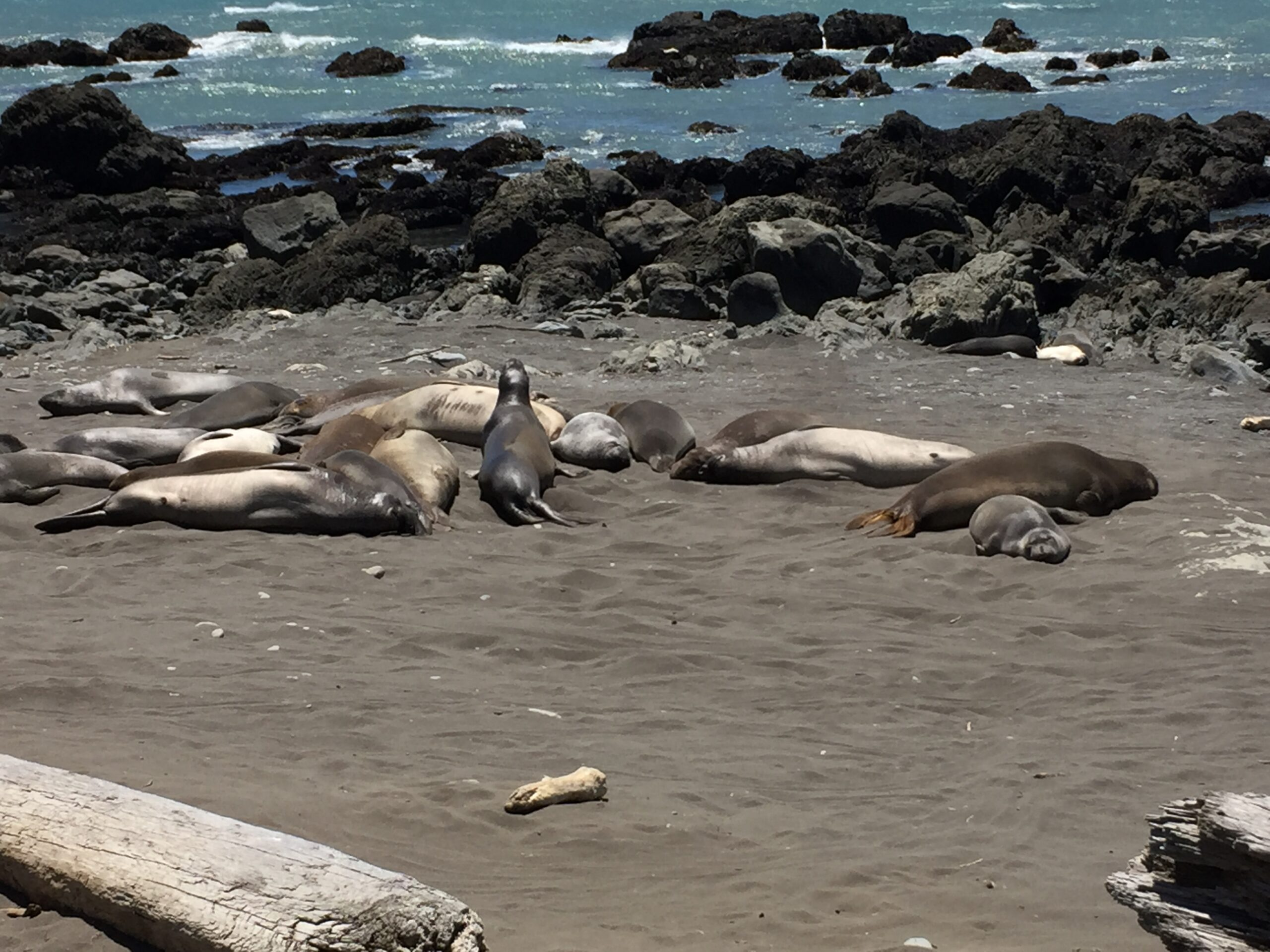 Sea lions at rest near the Punta Gorda Lighthouse